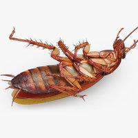 cockroach american rigged 3D model