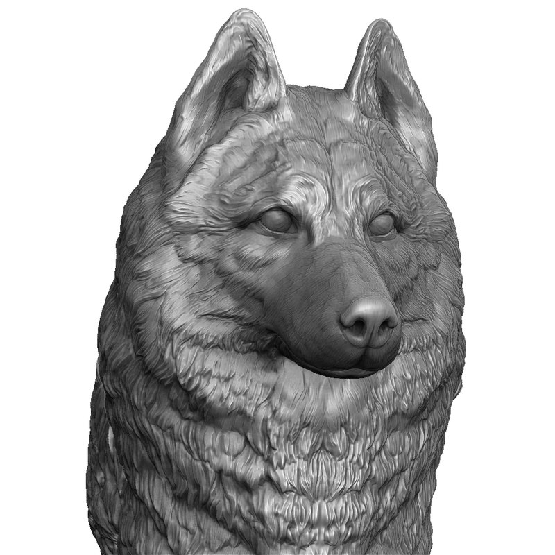 husky head realistic model