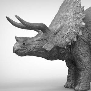 triceratops ztl zbrush 3D model