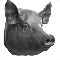 3D model pig realistic head