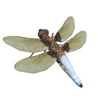 insect dragonfly model