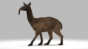 macrauchenia extinct mammal 3D model
