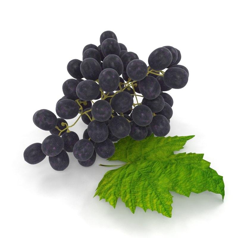 3D grapes leaf purple model
