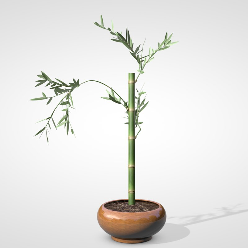 bamboo ikebana 3D model