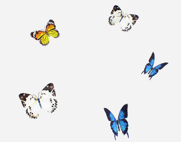 art butterflie insect model