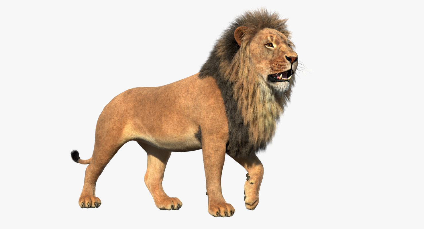 3D lion rigged