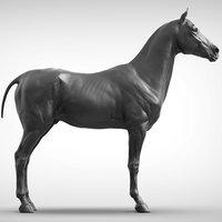 3D sport horse
