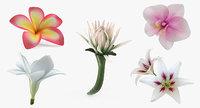3D model flowers 7