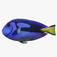 blue tang 3D
