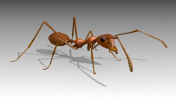 3D model ant fly