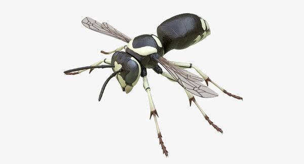 bald faced hornet 3D model