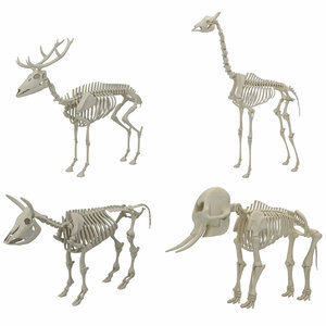 animal skeleton 3D model