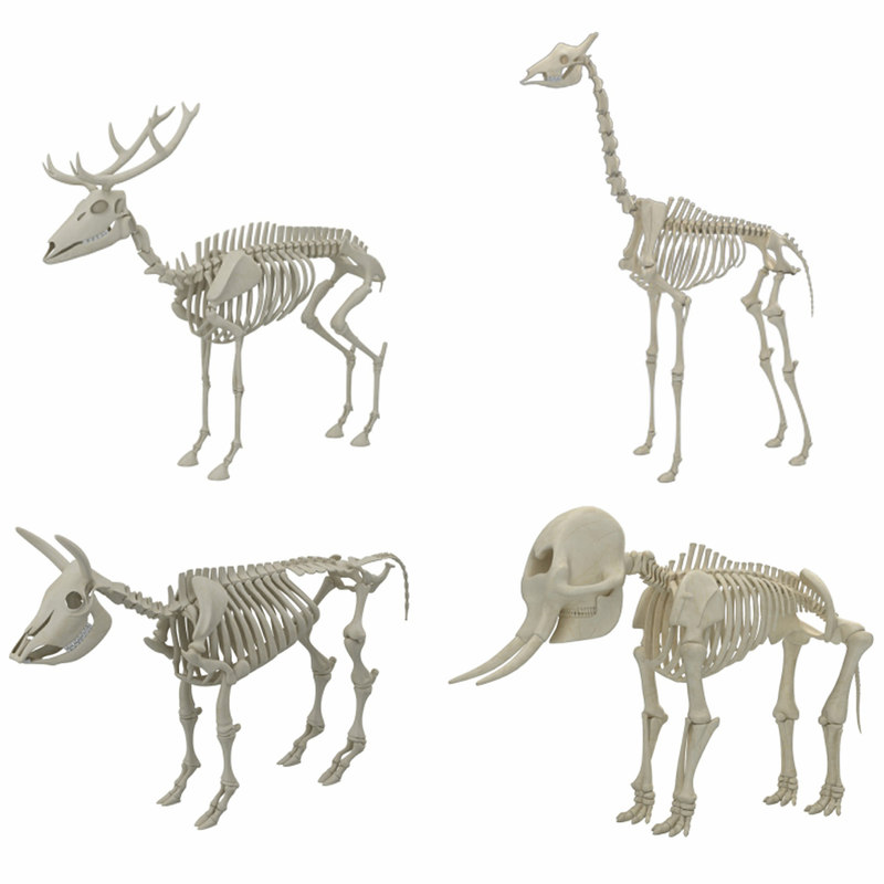 animal skeleton 3D model
