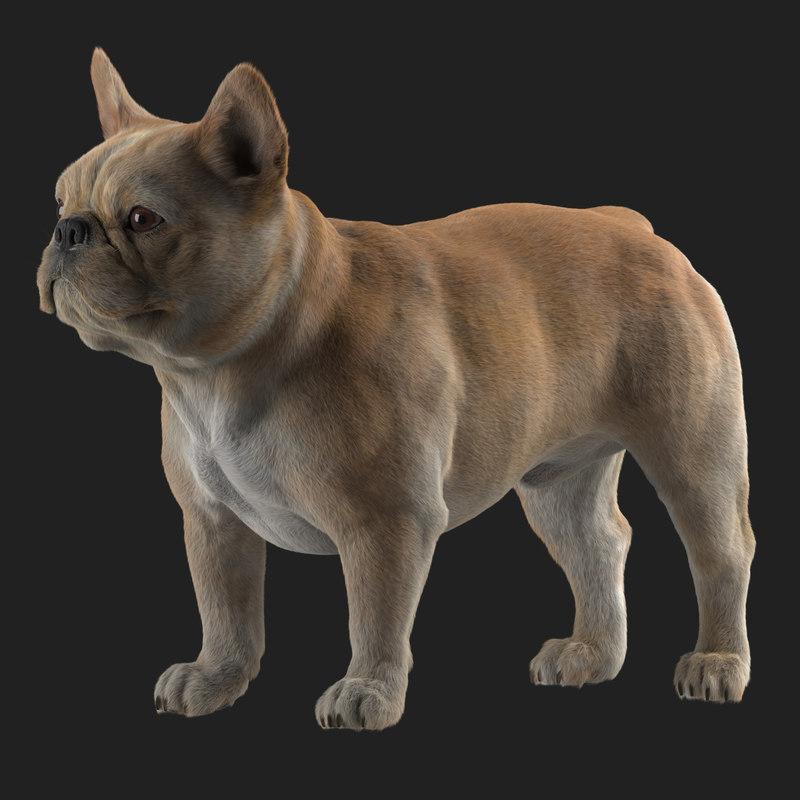 3D realistic french bulldog model