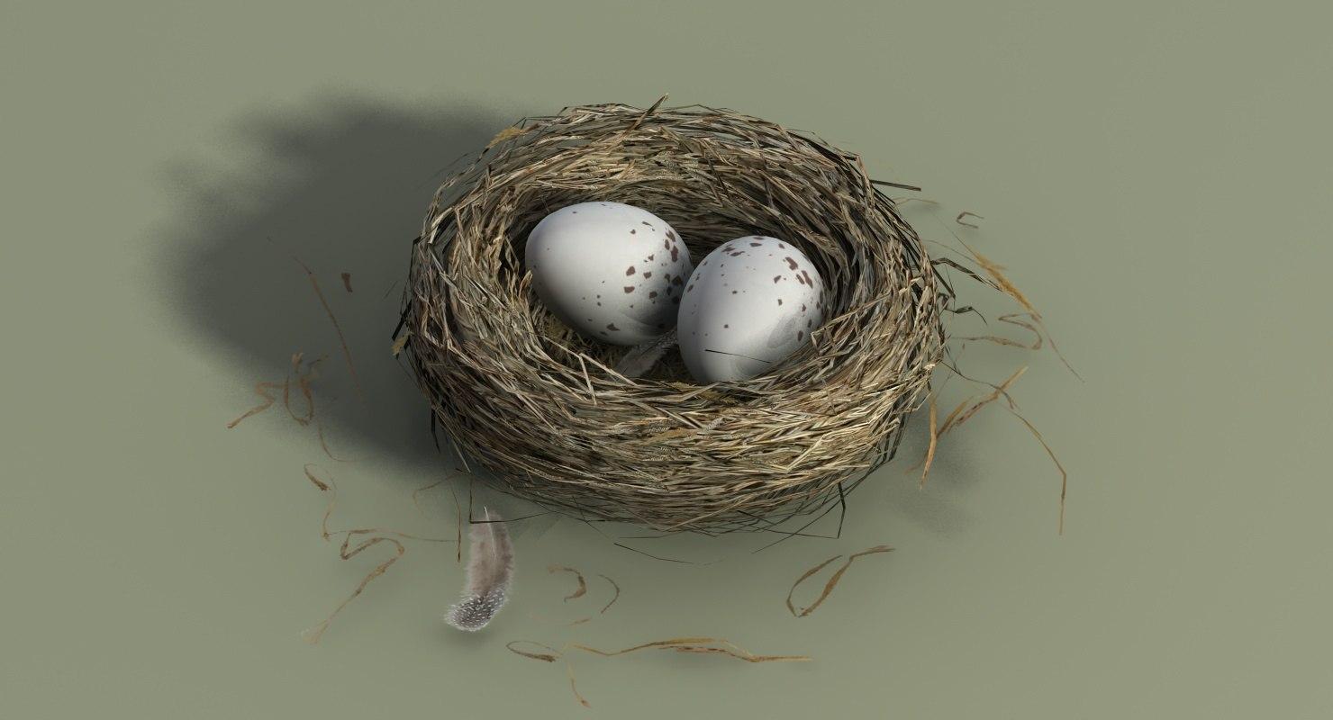 bird nest model