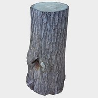 tree stump large knot model