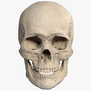 3D model realistic skull
