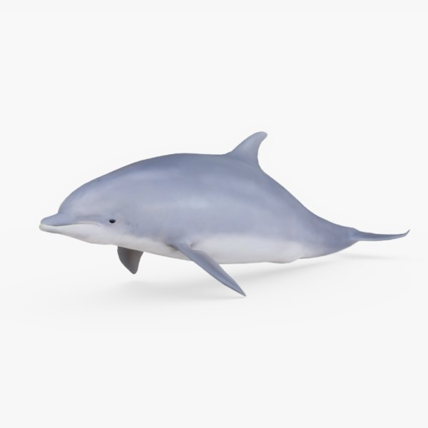 3D rigged bottlenose model
