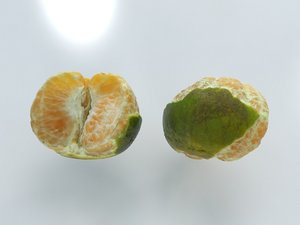 orange open model