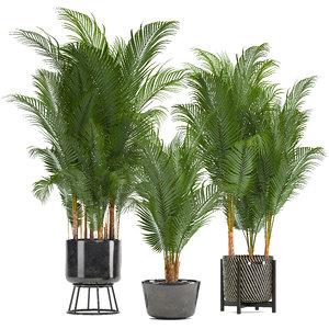 3D decorative palms