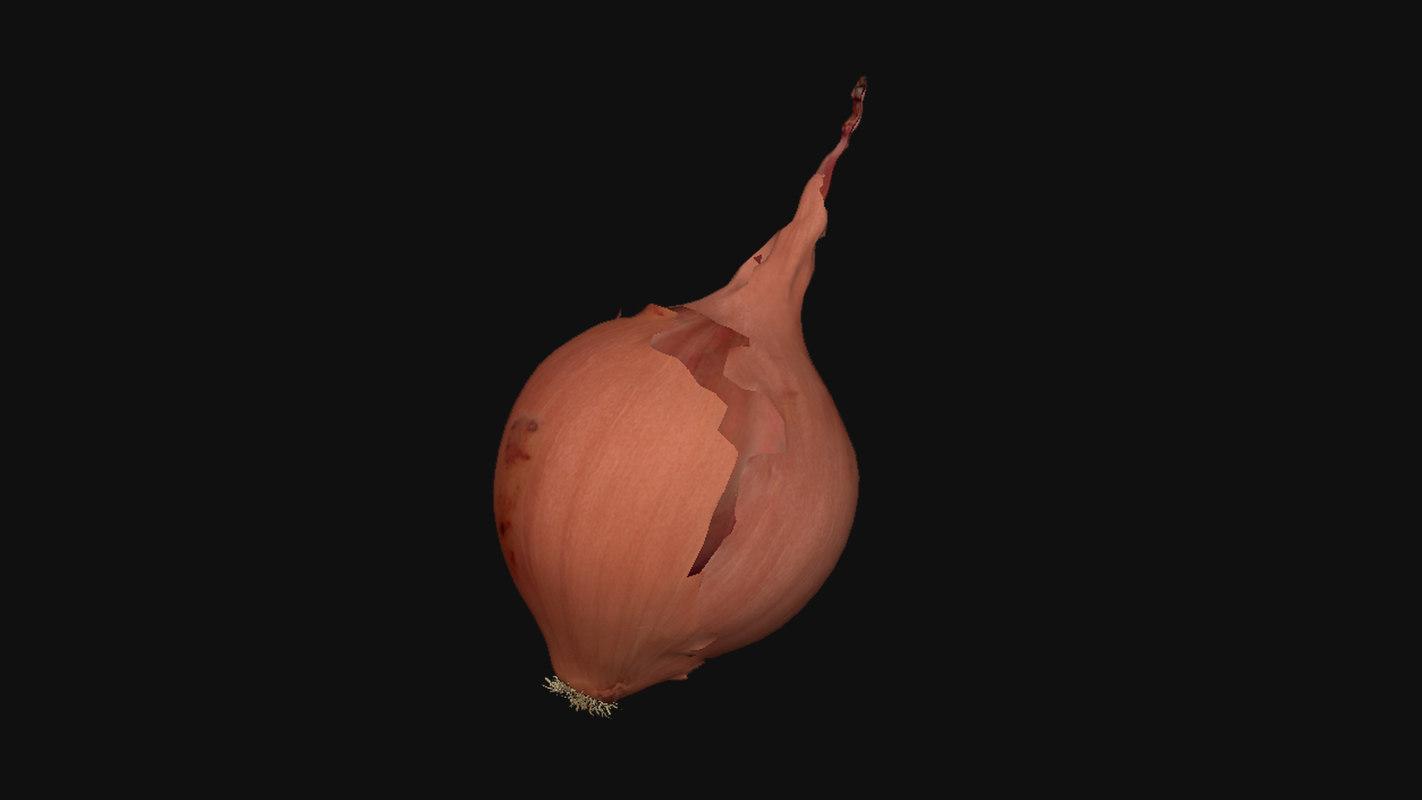 3D model oignon onion
