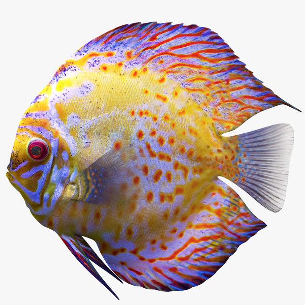 discus fish 3D