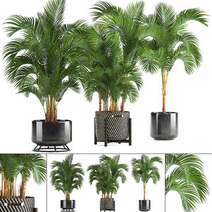 3D decorative palms model