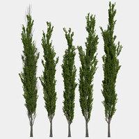 3D poplar trees
