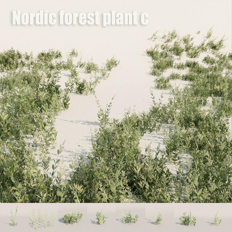 nordic forest plant c 3D model