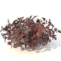 barberry 3D model