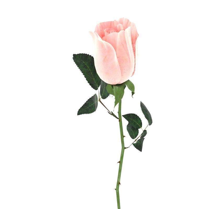 3D petal roses plant