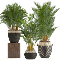 3D decorative palms
