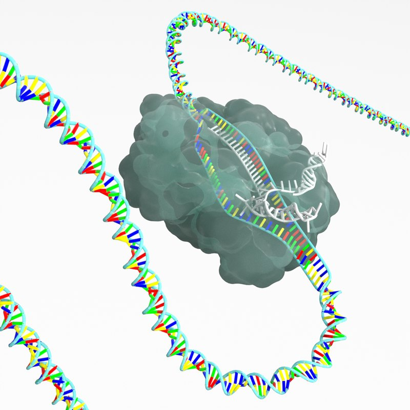 crispr-cas9 gene editing complex 3D