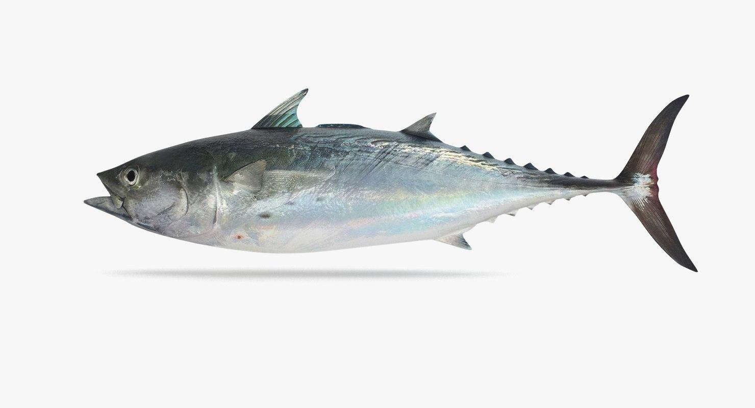 false albacore tuna 3D model