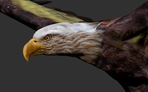eagle flying 3D