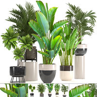 ornamental plants pots model