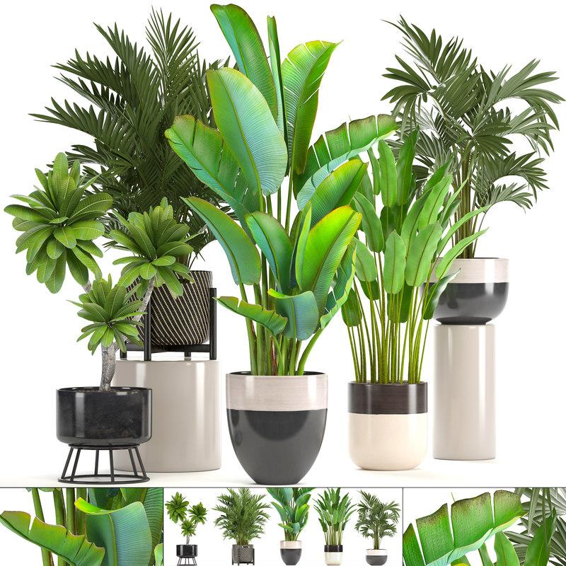 ornamental plants pots model