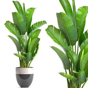ravenala palm 3D