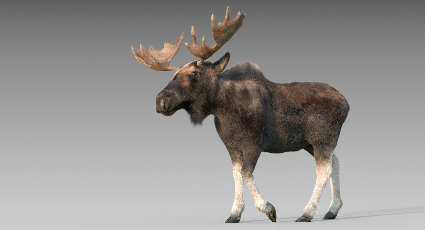 adult moose fur 3D model