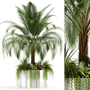 plants 104 3D model