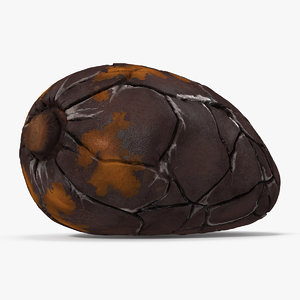 3D cacao bean model