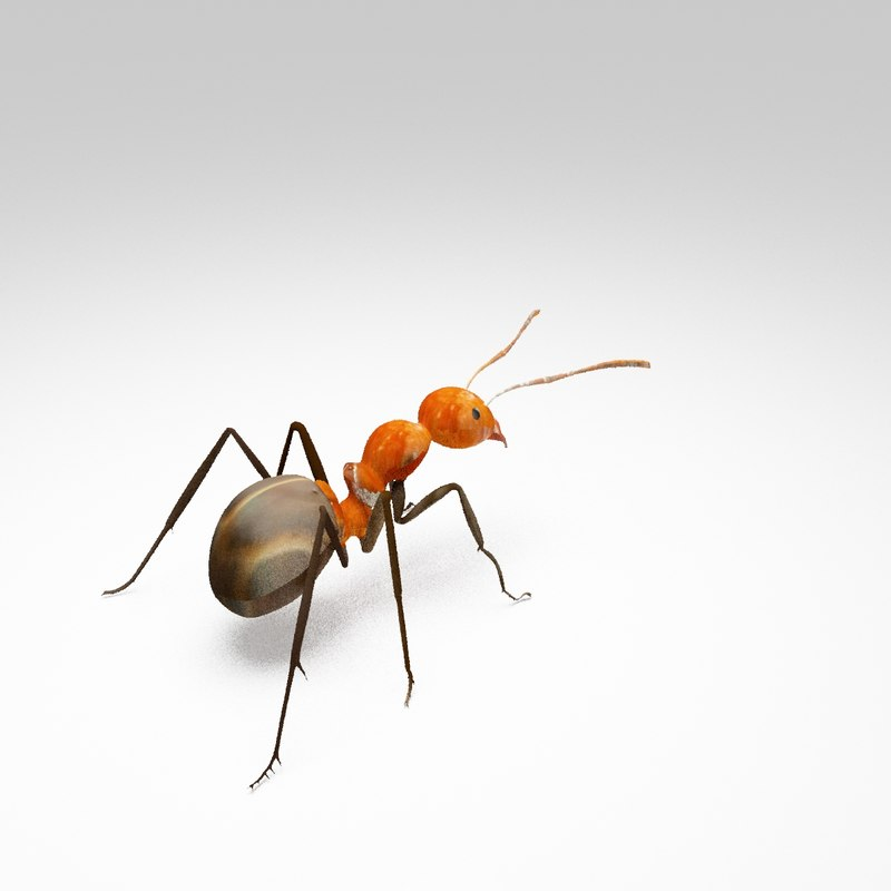 3D model forest ants