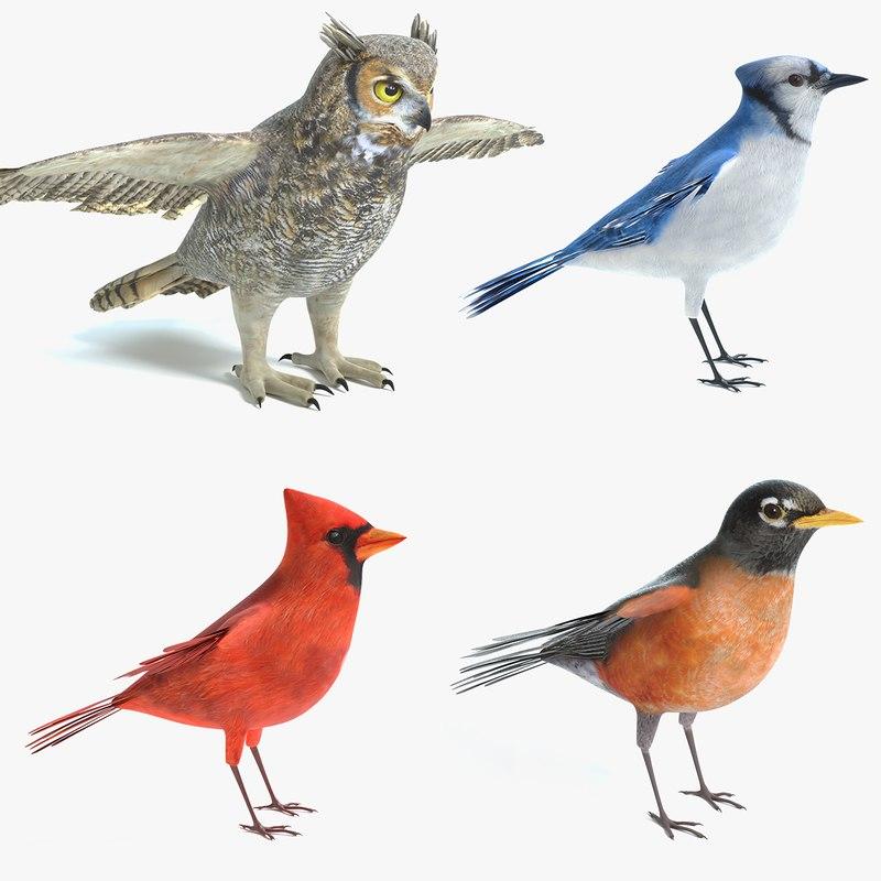 3D bird great horned