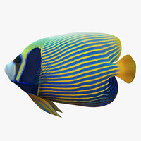 3D batterfly imperator fish