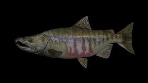 3D chum salmon