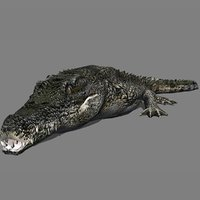 3D Alligator