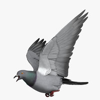 rigged rock pigeon dove 3D
