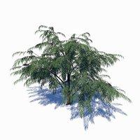 albizia tree 3D model