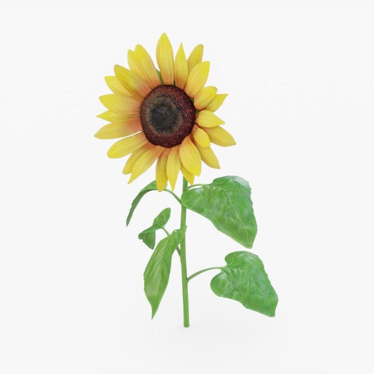 3D model sunflower sun flower