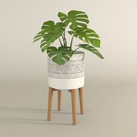 3D monstera pot plant